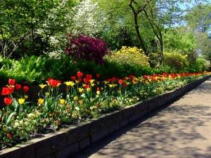tulips-174596_640